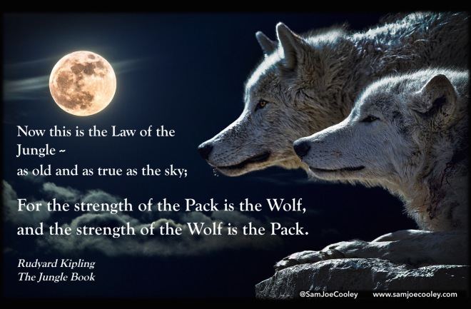 Strength-Wolfpack-The-Law-of-Jungle-Book-Wolf-Teamwork-Team-Building-Quote-Rudyard-Kipling-SamJoeCooley-Sam-Cooley-Blog